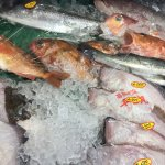 若狭直送鮮魚